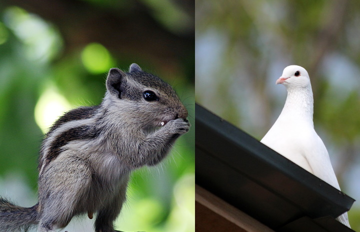 Birds-and-squirrels-damaging-your-roof