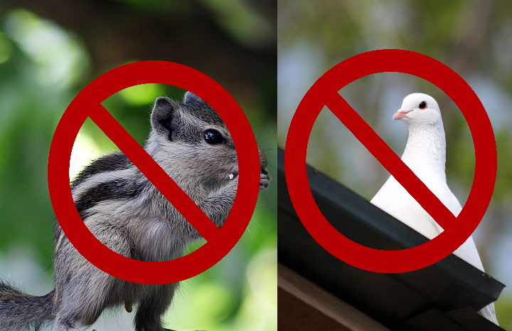 Preventing-Birds-and-squirrels-from-damaging-your-roof